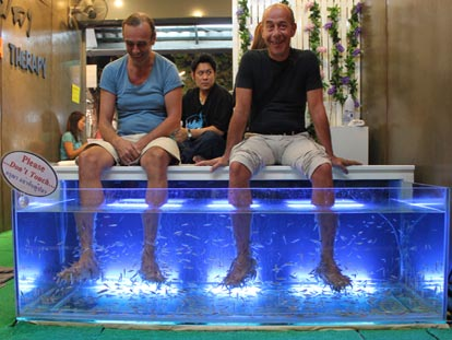 You can even get the fish to massage your feet